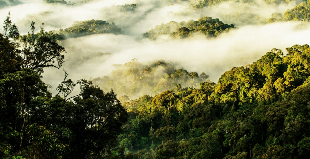 Nyungwe Forest: Survival and Recovery
