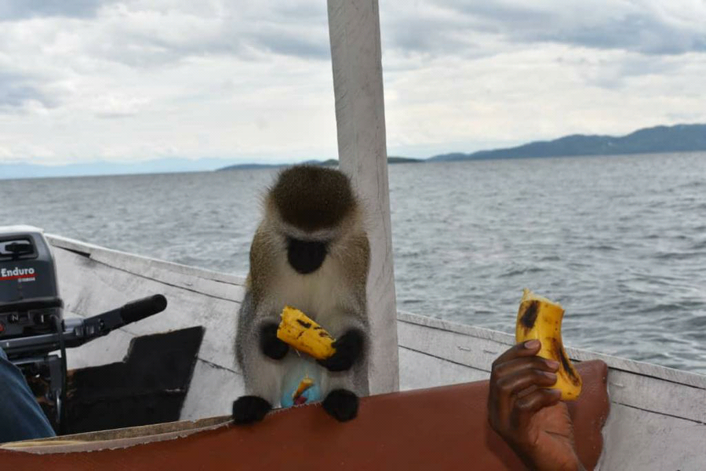 Tourism Memories: The Day I Reconciled With Monkeys