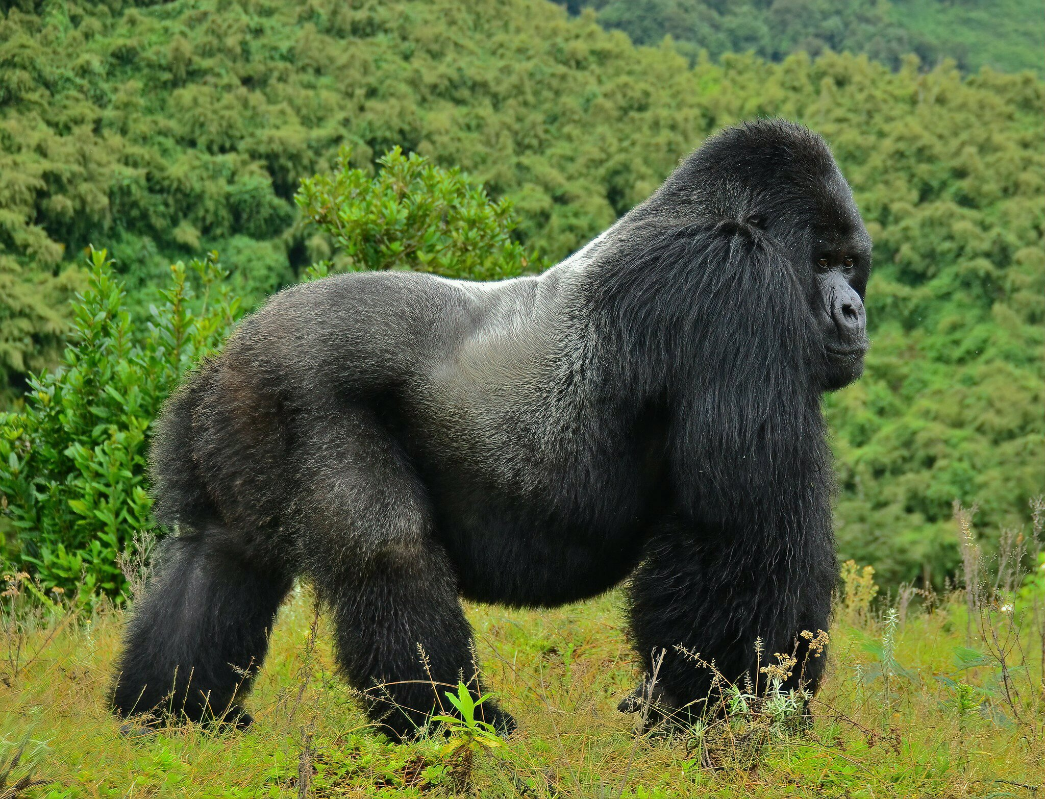 My Gorilla Trekking Virtual Tour
