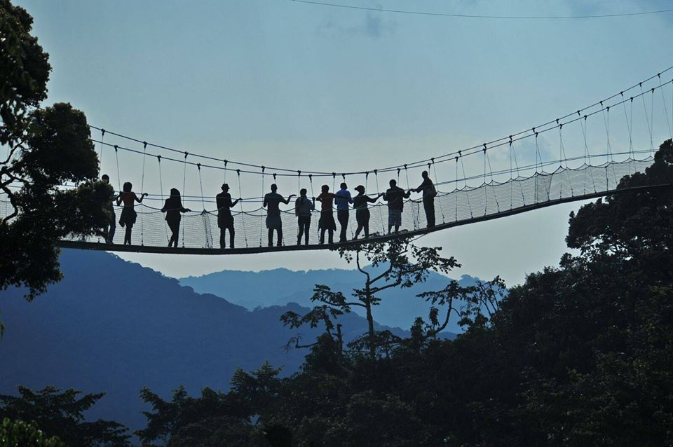 Canopy walk: The thrill of walking 70 meters above the floor of Nyungwe forest