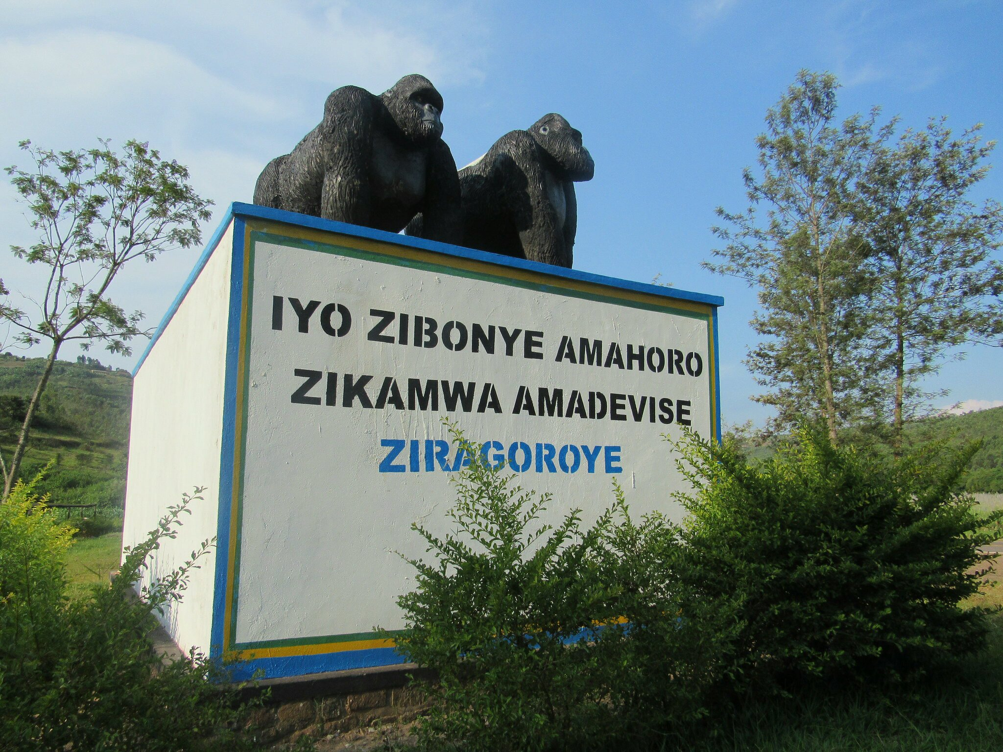 Gorillas cough up dollars into the national coffers
